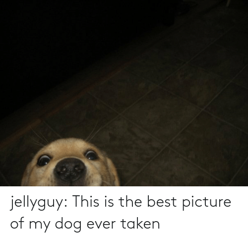Dog Ever: jellyguy:  This is the best picture of my dog ever taken