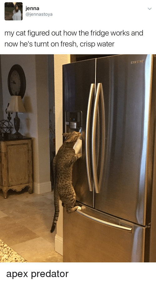Fresh, Getting Turnt, and Apex: jenna  @jennastoya  my cat figured out how the fridge works and  now he's turnt on fresh, crisp water   SAMSUNG apex predator
