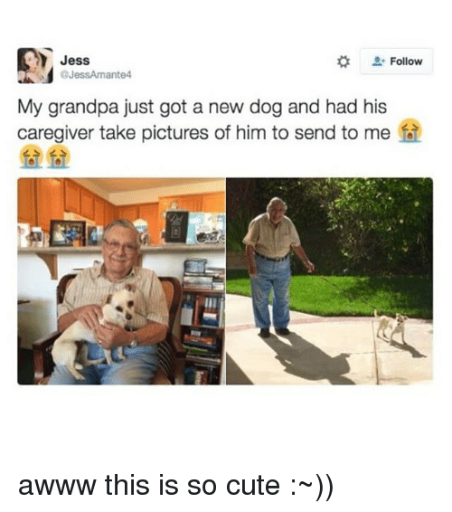 Memes, Grandpa, and Awww: Jess  Follow  @JessAmante4  My grandpa just got a new dog and had his  caregiver take pictures of him to send to me awww this is so cute :~))