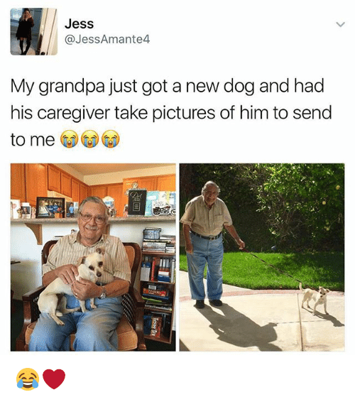 Memes, Grandpa, and Pictures: Jess  @JessAmante4  My grandpa just got a new dog and had  his caregiver take pictures of him to send  to me 😂❤️