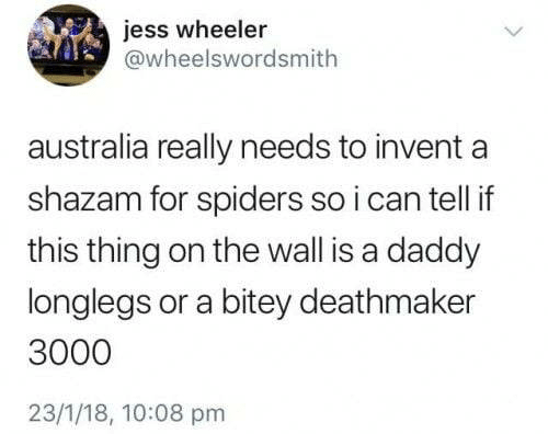 Spiders: jess wheeler  @wheelswordsmith  australia really needs to invent  shazam for spiders so i can tell if  this thing on the wall is a daddy  longlegs or a bitey deathmaker  3000  23/1/18, 10:08 pm