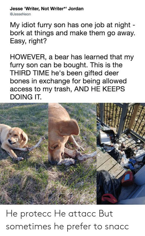 bork: Jesse 'Writer, Not Writer* Jordan  @JesseNeon  My idiot furry son has one job at night  bork at things and make them go away.  Easy, right?  HOWEVER, a bear has learned that my  furry son can be bought. This is the  THIRD TIME he's been gifted deer  bones in exchange for being allowed  access to my trash, AND HE KEEPS  DOING IT. He protecc He attacc But sometimes he prefer to snacc