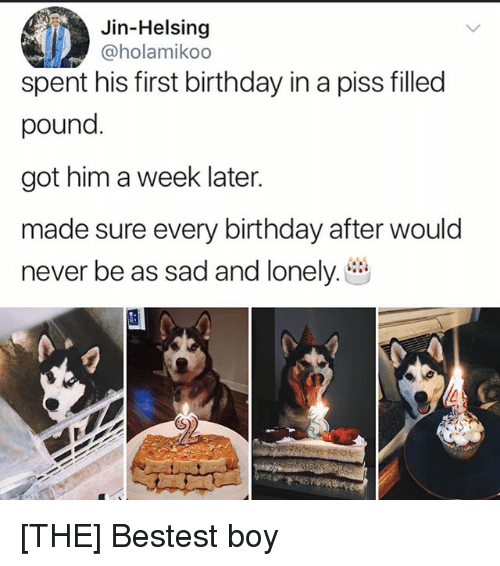 Birthday, Memes, and Sad: Jin-Helsing  @holamikoo  spent his first birthday in a piss filled  pound  got him a week later  made sure every birthday after would  never be as sad and lonely. [THE] Bestest boy