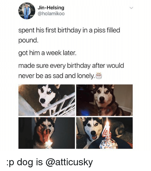 Birthday, Memes, and Sad: Jin-Helsing  @holamikoo  spent his first birthday in a piss filled  pound  got him a week later.  made sure every birthday after would  never be as sad and lonely. :p dog is @atticusky
