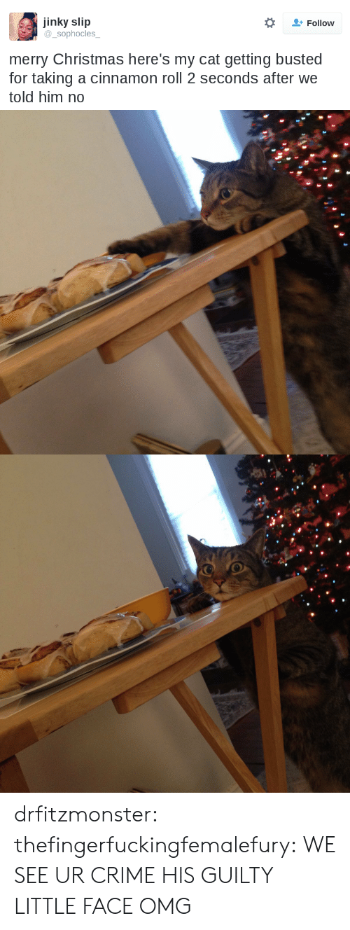 Merry Christmas: jinky slip  sophocles  Follow  merry Christmas here's my cat getting busted  for taking a cinnamon roll 2 seconds after we  told him no drfitzmonster: thefingerfuckingfemalefury:  WE SEE UR CRIME   HIS GUILTY LITTLE FACE OMG