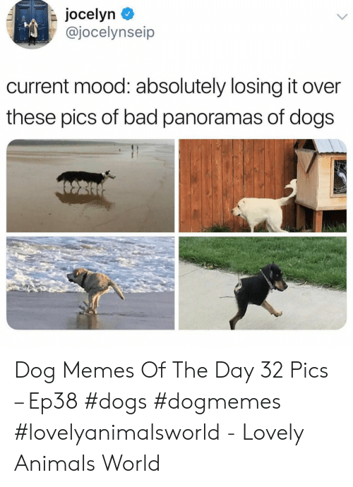 Pics Of: jocelyn  @jocelynseip  current mood: absolutely losing it over  these pics of bad panoramas of dogs Dog Memes Of The Day 32 Pics – Ep38 #dogs #dogmemes #lovelyanimalsworld - Lovely Animals World