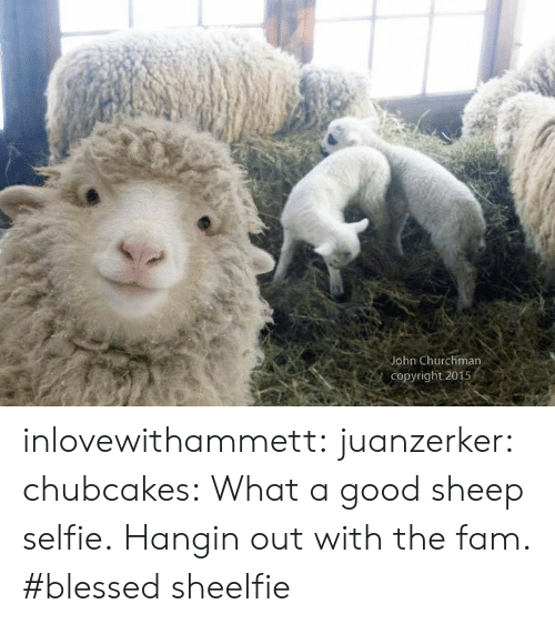 sheep: John Churchman  Copyright 2015 inlovewithammett:  juanzerker:   chubcakes: What a good sheep selfie.  Hangin out with the fam. #blessed   sheelfie