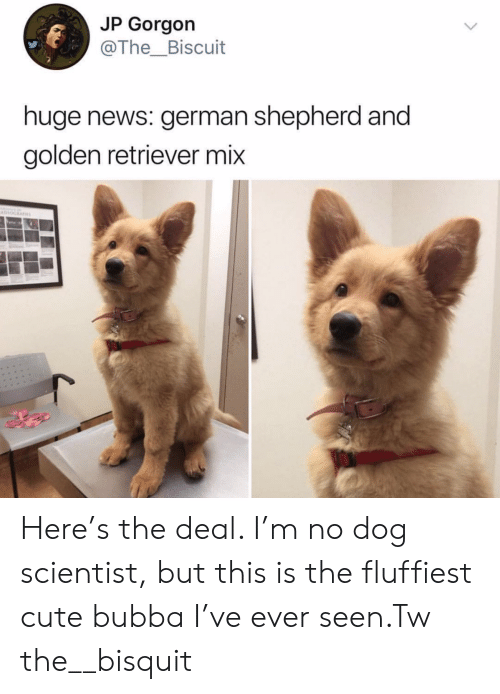 Bubba, Cute, and News: JP Gorgon  @The_Biscuit  huge news: german shepherd and  golden retriever mix  Havno Here's the deal. I'm no dog scientist, but this is the fluffiest cute bubba I've ever seen.Tw the__bisquit