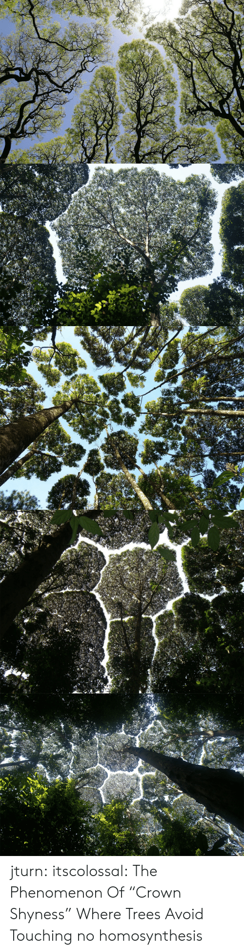 "crown: jturn: itscolossal: The Phenomenon Of ""Crown Shyness"" Where Trees Avoid Touching  no homosynthesis"