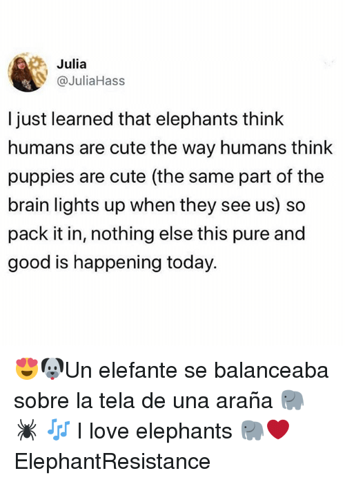 tela: Julia  @JuliaHass  l just learned that elephants think  humans are cute the way humans think  puppies are cute (the same part of the  brain lights up when they see us) so  pack it in, nothing else this pure and  good is happening today. 😍🐶Un elefante se balanceaba sobre la tela de una araña 🐘 🕷 🎶 I love elephants 🐘❤️ ElephantResistance