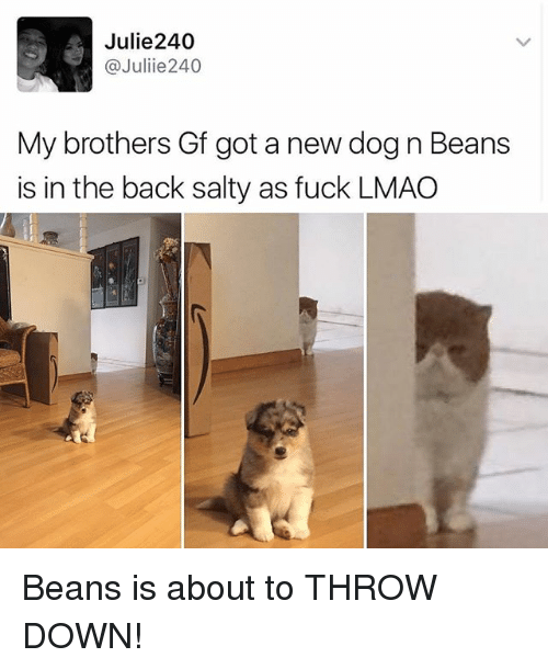 Throw Down: Julie240  @Juliie 240  My brothers Gf got a new dog n Beans  is in the back salty as fuck LMAO Beans is about to THROW DOWN!