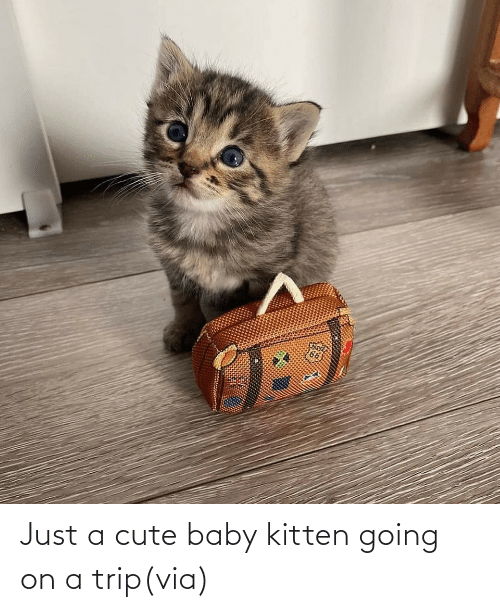 trip: Just a cute baby kitten going on a trip(via)