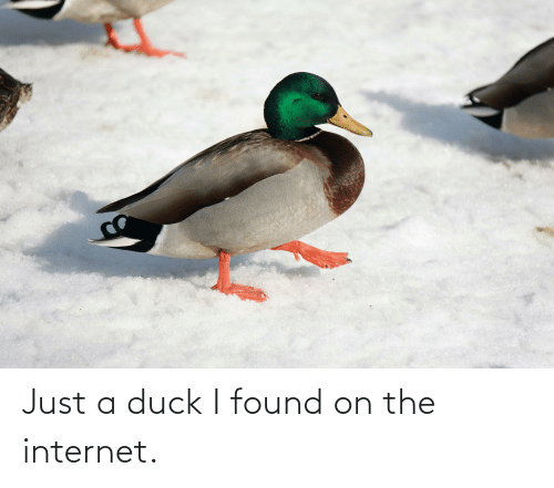 the internet: Just a duck I found on the internet.