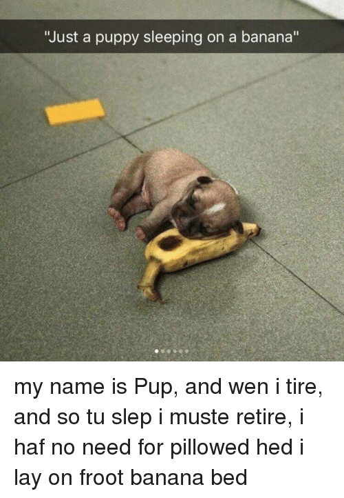 """Banana, Puppy, and Sleeping: """"Just a puppy sleeping on a banana"""" my name is Pup, and wen i tire, and so tu slep i muste retire, i haf no need for pillowed hed i lay on froot banana bed"""