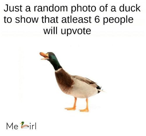 Just A: Just a random photo of a duck  to show that atleast 6 people  will upvote Me🦆irl