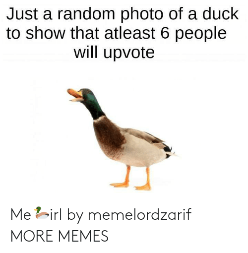 Just A: Just a random photo of a duck  to show that atleast 6 people  will upvote Me🦆irl by memelordzarif MORE MEMES