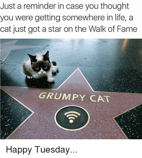 Cats, Life, and Memes: Just a reminder in case you thought  you were getting somewhere in life, a  cat just got a star on the Walk of Fame  GRUMPY CAT Happy Tuesday...