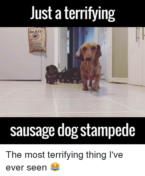 b12: Just a terrifying  NO B12  sausage dogstampede The most terrifying thing I've ever seen 😂