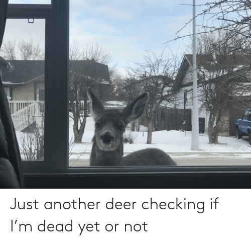 Deer: Just another deer checking if I'm dead yet or not