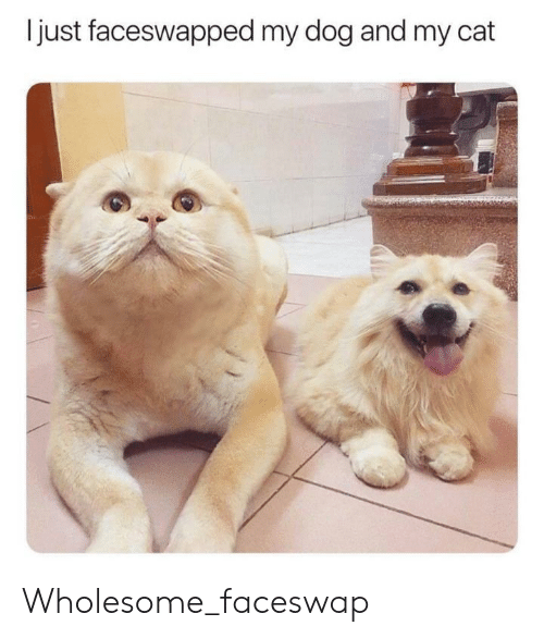 Wholesome, Dog, and Cat: just faceswapped my dog and my cat Wholesome_faceswap