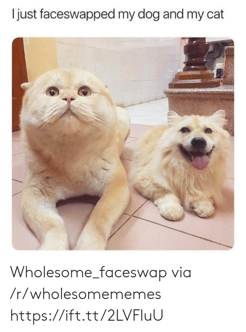 Wholesome, Dog, and Cat: just faceswapped my dog and my cat Wholesome_faceswap via /r/wholesomememes https://ift.tt/2LVFluU