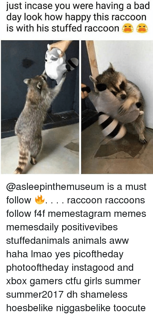 Awwe: just incase you were having a bad  day look how happy this raccoon  is with his stuffed raccoon @asleepinthemuseum is a must follow 🔥. . . . raccoon raccoons follow f4f memestagram memes memesdaily positivevibes stuffedanimals animals aww haha lmao yes picoftheday photooftheday instagood and xbox gamers ctfu girls summer summer2017 dh shameless hoesbelike niggasbelike toocute
