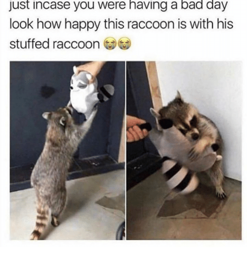 Just Incase: Just incase you were having a bad day  look how happy this raccoon is with his  stuffed raccoon