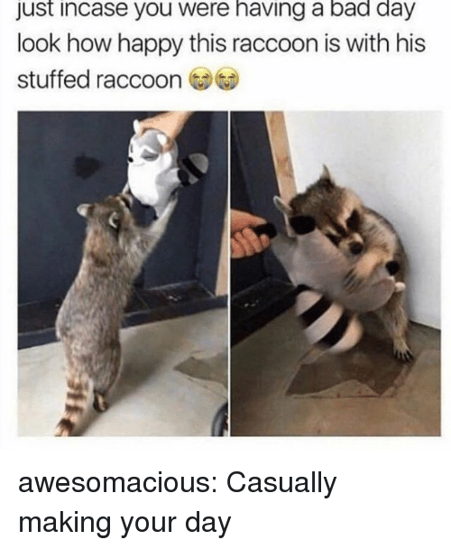 Just Incase: just incase you were having a bad day  look how happy this raccoon is with his  stuffed raccoon awesomacious:  Casually making your day