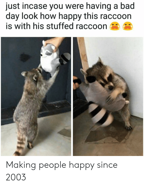 Just Incase: just incase you were having a bad  day look how happy this raccoon  is with his stuffed raccoon Making people happy since 2003