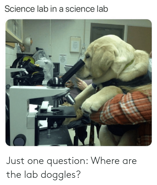 Just One: Just one question: Where are the lab doggles?