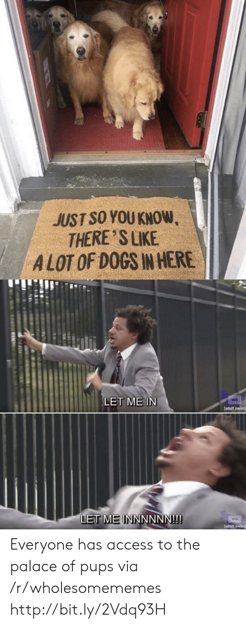 Adult Swim: JUST SO YOU KNOW  THERE 'S LIKE  ALOT OF DOGS IN HERE  LET ME IN  [adult swim]  LET MEINNNNNN!!! Everyone has access to the palace of pups via /r/wholesomememes http://bit.ly/2Vdq93H