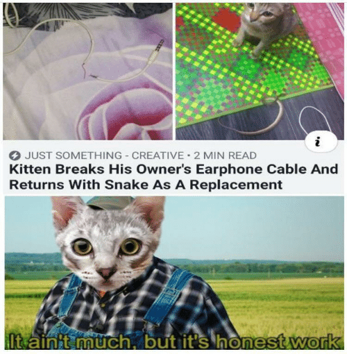Work, Snake, and Cable: JUST SOMETHING CREATIVE 2 MIN READ  Kitten Breaks His Owner's Earphone Cable And  Returns With Snake As A Replacement  It ainit much, but it's honest.work