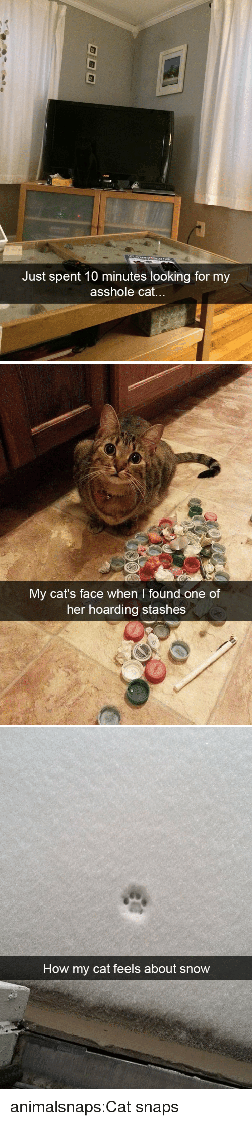 Cats, Target, and Tumblr: Just spent 10 minutes looking for my  asshole cat...   My cat's face when I found one of  her hoarding stashes   How my cat feels about snow animalsnaps:Cat snaps