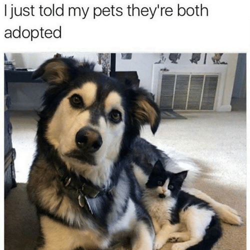 Memes, Pets, and 🤖: just told my pets they're both  adopted