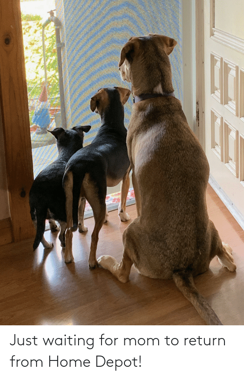 Depot: Just waiting for mom to return from Home Depot!