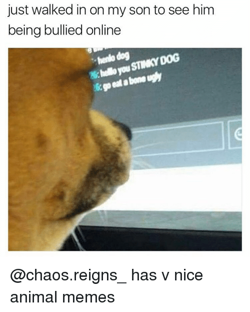 Animation Meme: just walked in on my son to see him  being bullied online  hendo dog  STINKY DOG @chaos.reigns_ has v nice animal memes