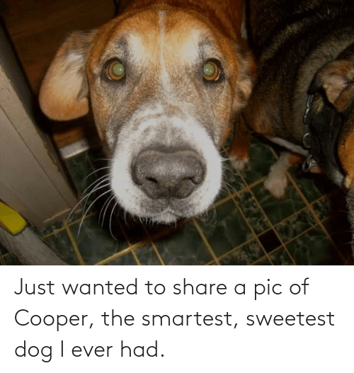 Ever Had: Just wanted to share a pic of Cooper, the smartest, sweetest dog I ever had.