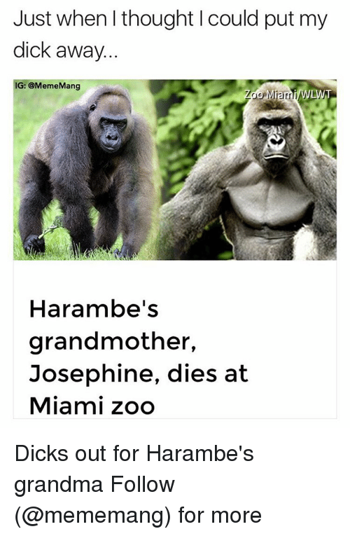 Haramber: Just when thought could put my  dick away  G: @MemeMang  LWT  Harambe's  grandmother,  Josephine, dies at  Miami zoo Dicks out for Harambe's grandma Follow (@mememang) for more