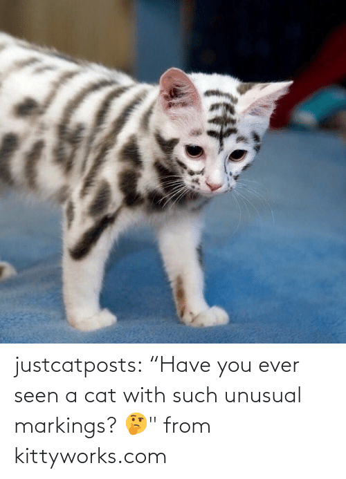 "cat: justcatposts:  ""Have you ever seen a cat with such unusual markings? 🤔"" from kittyworks.com"
