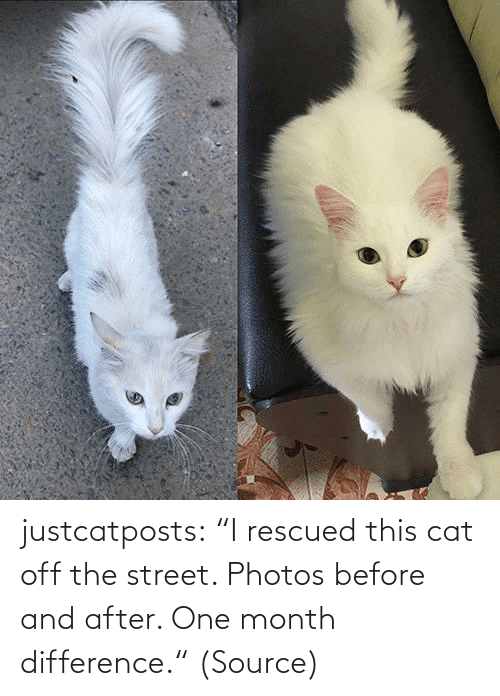 "street: justcatposts:  ""I rescued this cat off the street. Photos before and after. One month difference."" (Source)"