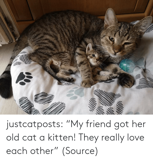 "my friend: justcatposts:  ""My friend got her old cat a kitten! They really love each other"" (Source)"
