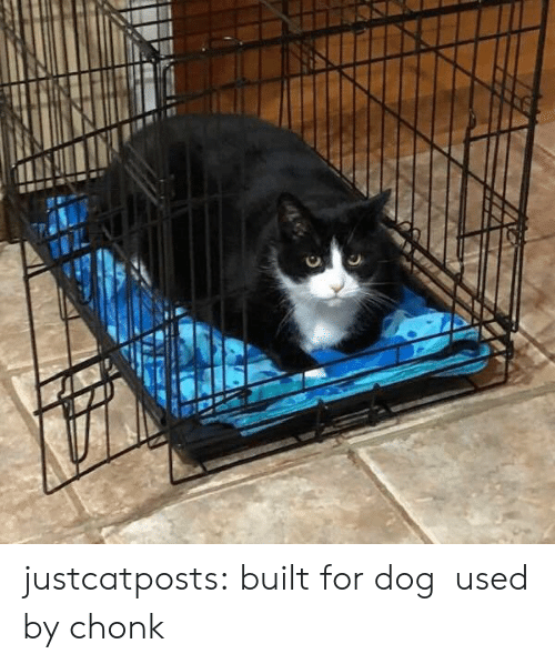 Chonk: justcatposts: built for dog used by chonk