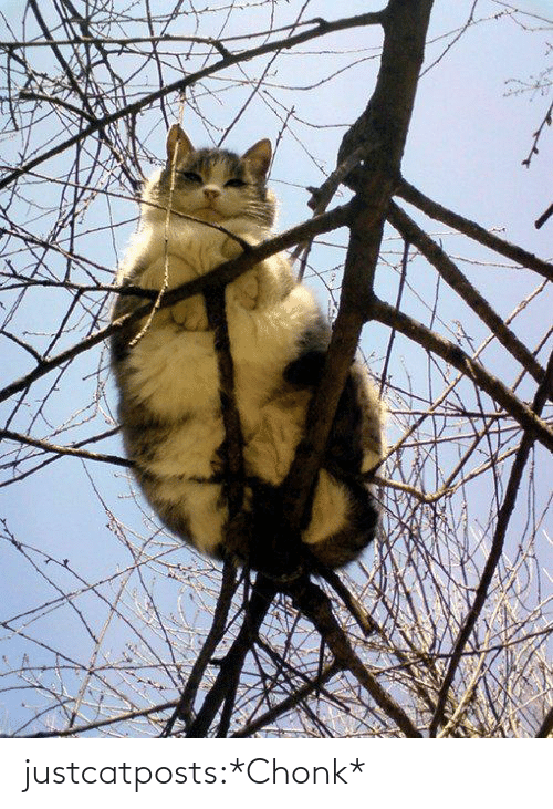 Chonk: justcatposts:*Chonk*