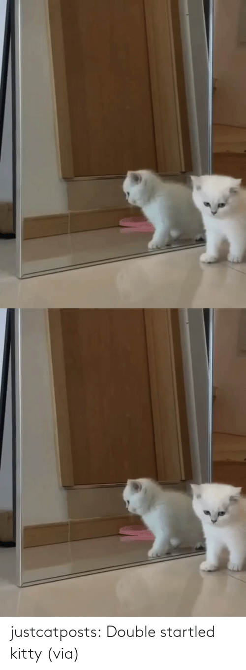 double: justcatposts:  Double startled kitty(via)