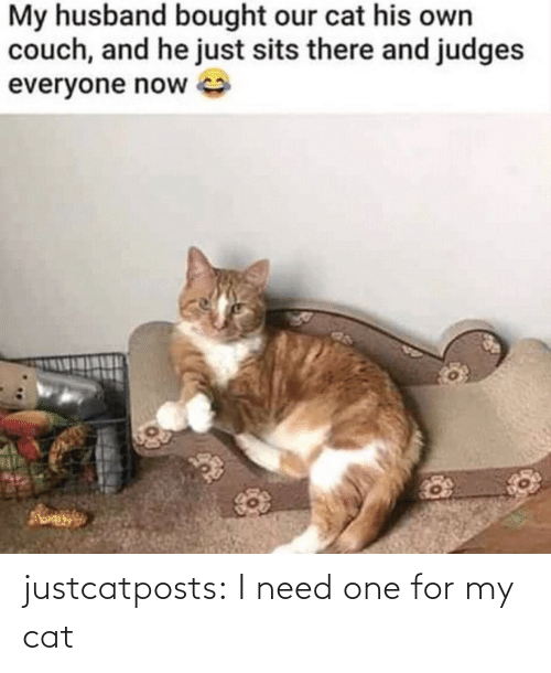 cat: justcatposts:  I need one for my cat