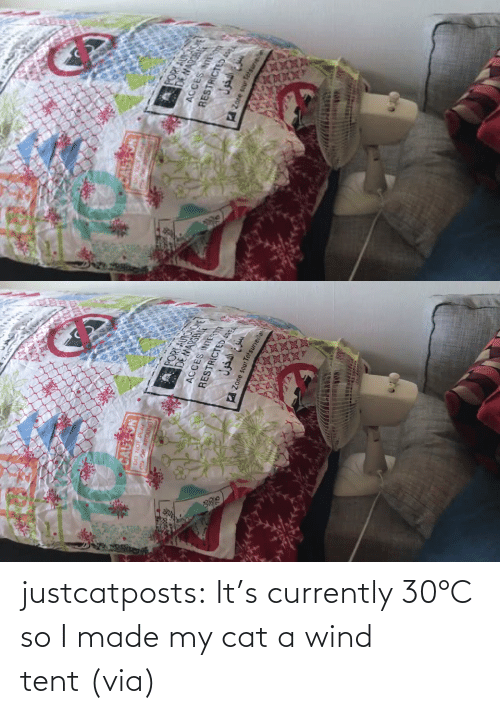 Made My: justcatposts:  It's currently 30°C so I made my cat a wind tent (via)