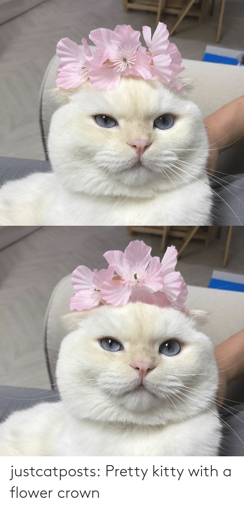 Flower: justcatposts:  Pretty kitty with a flower crown