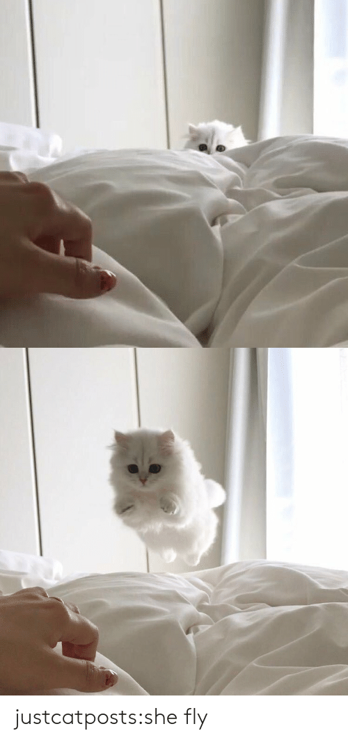 Target, Tumblr, and Blog: justcatposts:she fly
