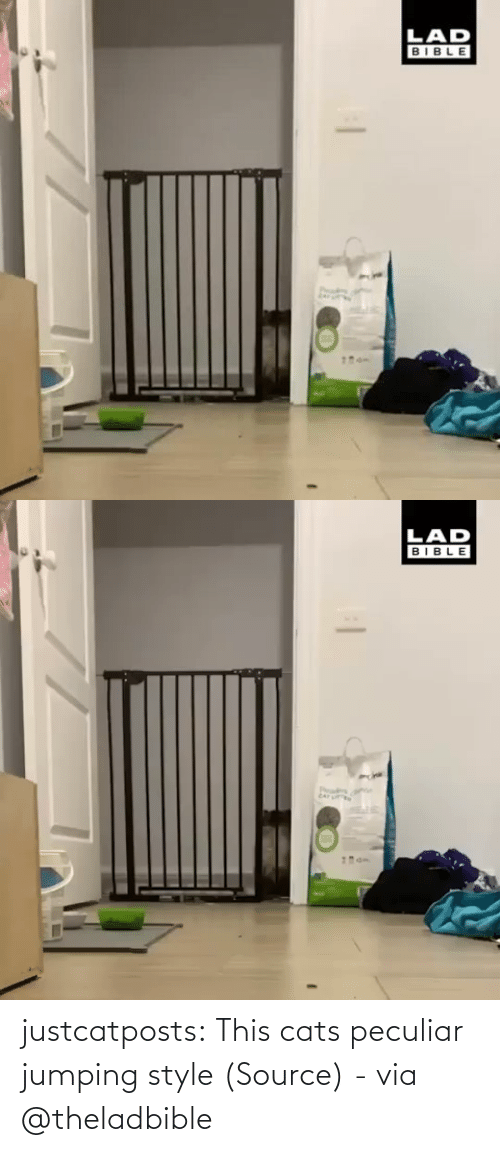 Com Watch: justcatposts:  This cats peculiar jumping style (Source) - via @theladbible