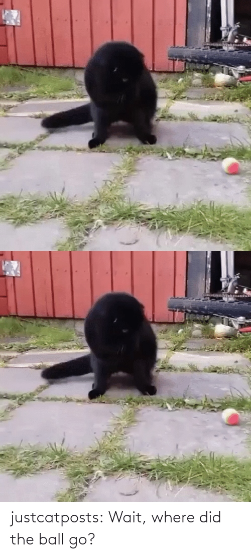 Where: justcatposts:  Wait, where did the ball go?